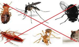dịch vụ tư vấn kiểm soát côn trùng gây hại