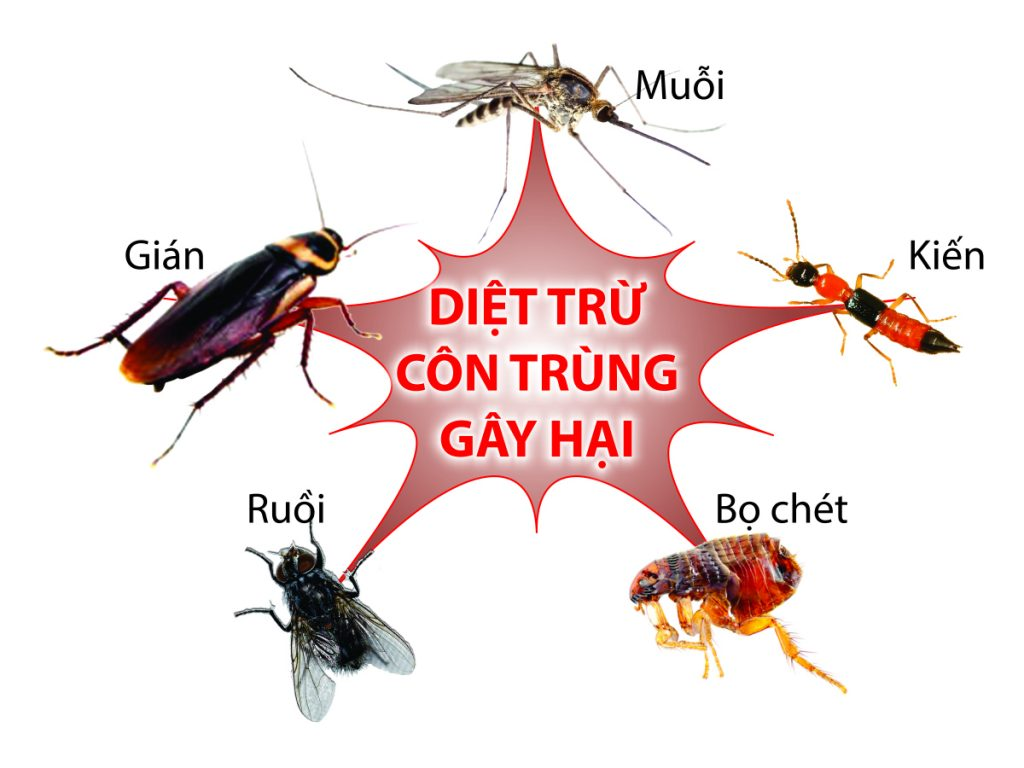 Tìm hiểu về sự độc hại của côn trùng đối với sức khỏe con người