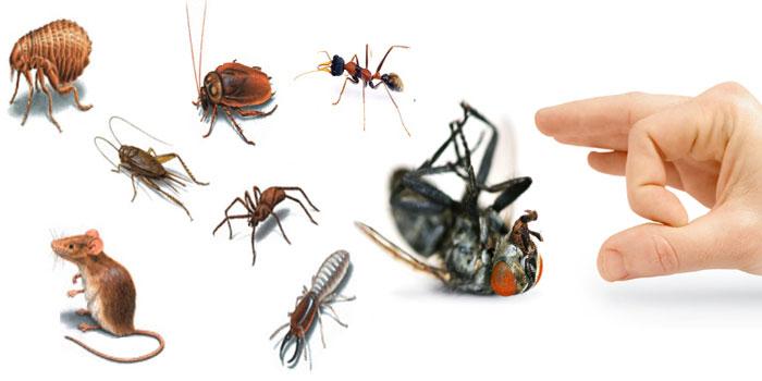 dịch vụ kiểm soát côn trùng tư gia Tâm Phúc